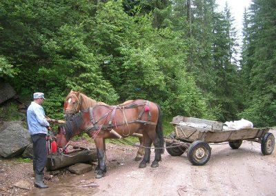 29-Romania-Pferd